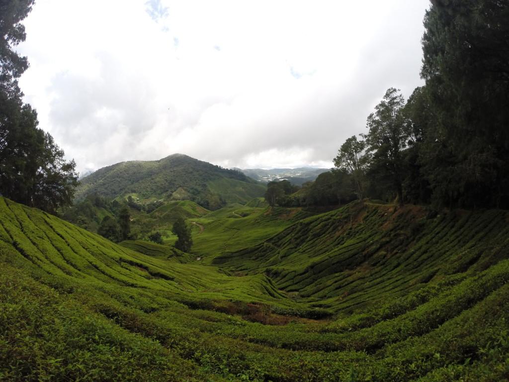 Wyjazd do Malezji Cameron Highlands