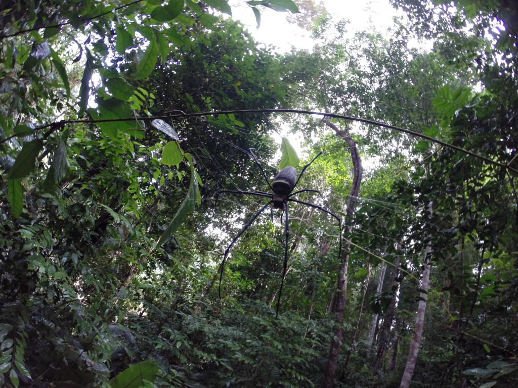Wyjazd do Malezji Taman Negara