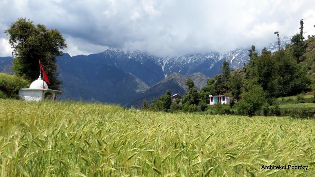 okolice Dharamsali