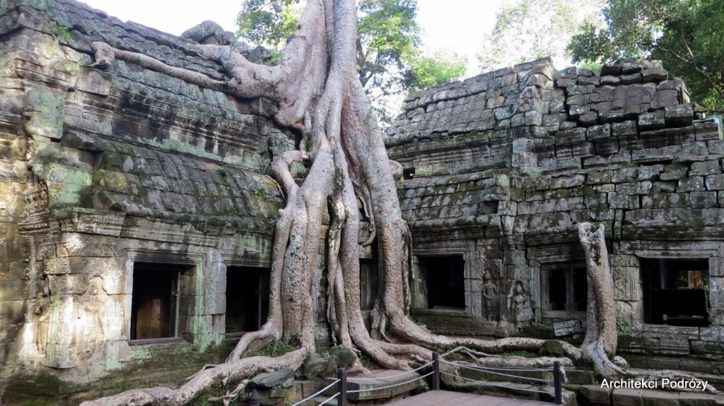 Kambodża, dżungla w Angkor Thom