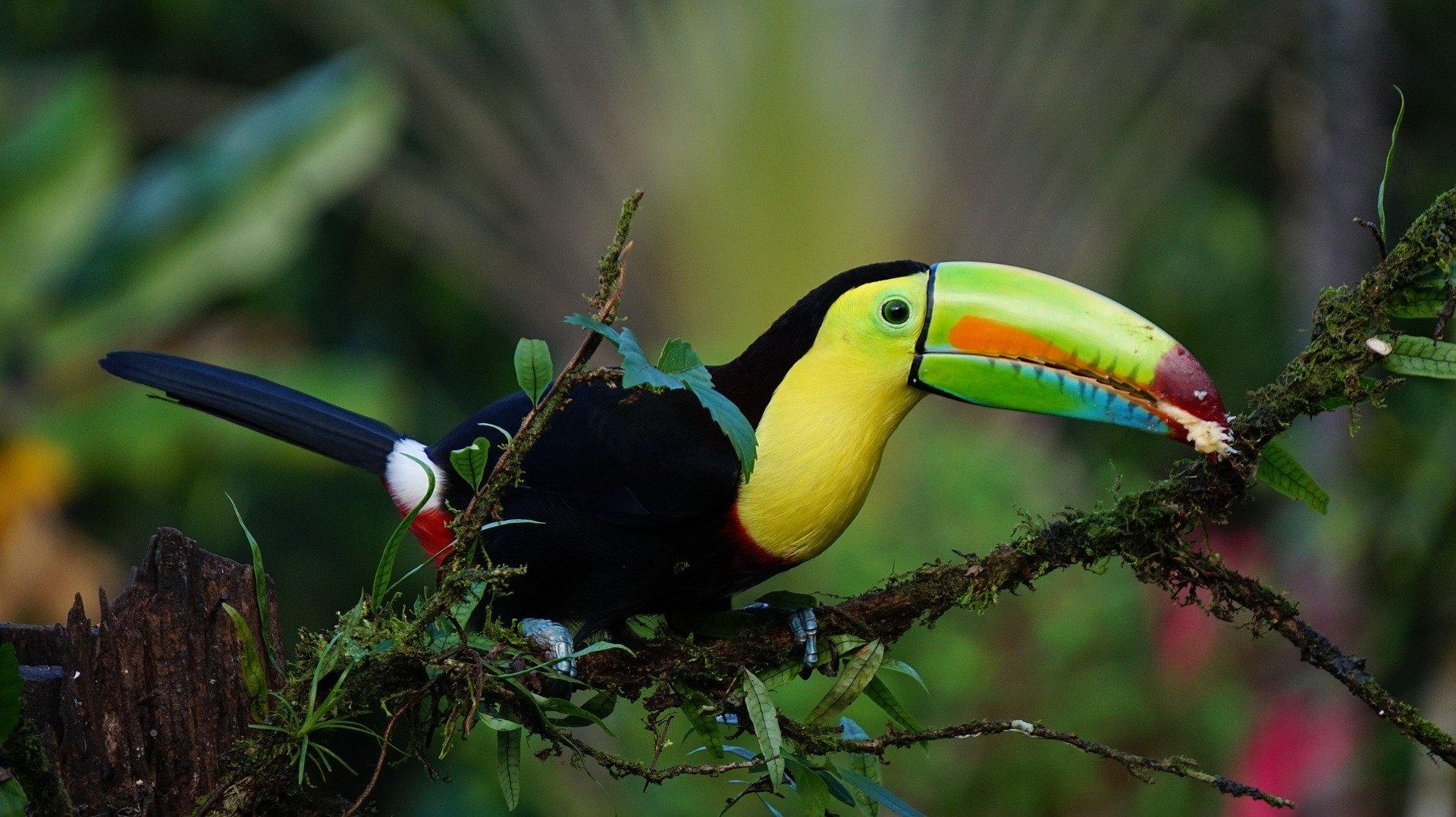 Ameryka Środkowa – Panama i Kostaryka w 2 tygodnie