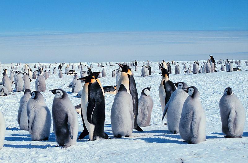 pingwiny w Patagonii