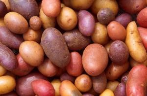 Różne gatunki ziemniaków