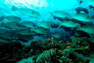 Wyjazd do Malezji - nurkowanie w Sipadan