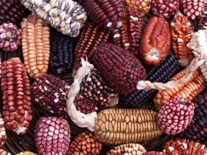Peruwiańska kukurydza