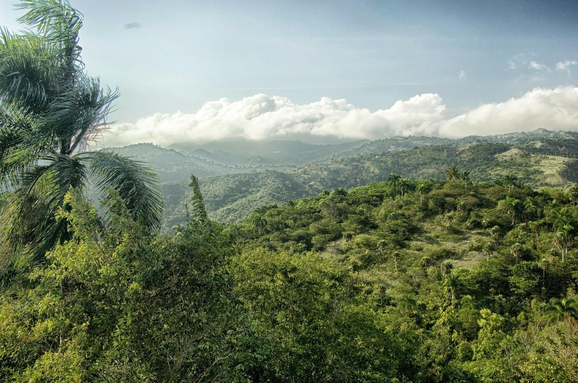 Dżungla na Dominikanie