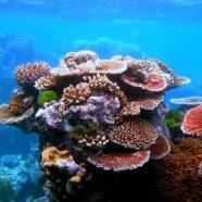 3 tygodnie w Australii – Wschodnie Wybrzeże