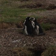Kasia i Olek – Patagonia