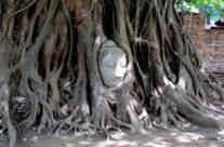 Ayutthaya -Wat Mahathat