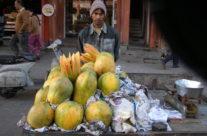 Indie – Jaipur – stragan z papajami