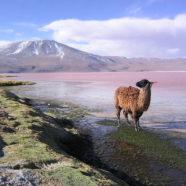 Boliwia – od ośnieżonych szczytów Andów do dorzecza Amazonki