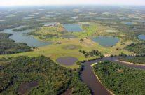 Wyjazd do Brazylii – Pantanal