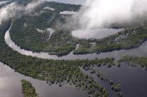 Wyjazd do Brazylii – lasy deszczowe Amazonii
