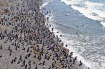 Wyjazd do Patagonii – pingwiny na Punta Tombo