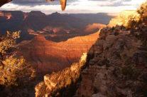 Wyjazd do USA – Widok na Wielki Kanion
