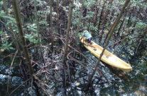 Wyjazd na Filipiny – Palawan – lasy namorzynowe
