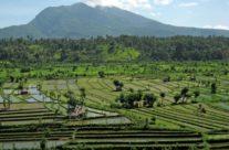 Wyspa bali – pola ryżowe