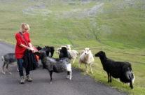 Owiec jest tu więcej niż ludzi, a i tak baraninę się importuje.