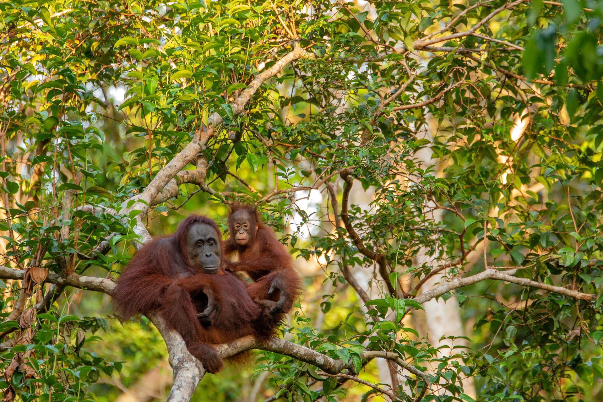 Borneo w dwa tygodnie